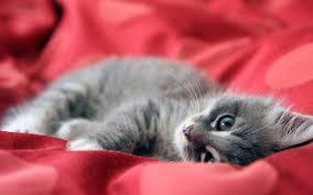 cute kittens wallpapers for mobile. Interesting For Images For U003e Cute Kittens Wallpapers Mobile On N