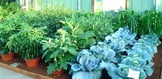 patio vegetable garden container plants potted ideas images