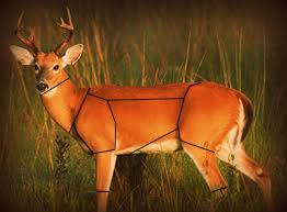 Interactive Deer Processing Butchering Cuts Chart Venison