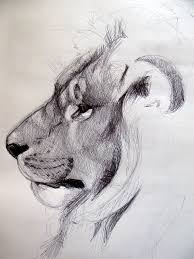 Sketches Animal 40 Beautiful And Realistic Animal Sketches For Your Inspiration
