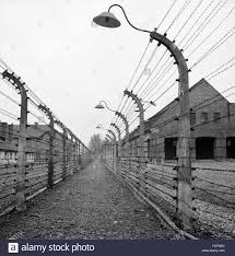 barbed wire fence concentration camp. Nazism / National Socialism Crimes Concentration Camps KZ Auschwitz Birkenau Barbed Wire Fence 1970s, Camp R