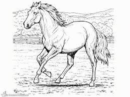 Kleurplaten Paard Kleurplaten Kleurplaatnl Intended For Paarden
