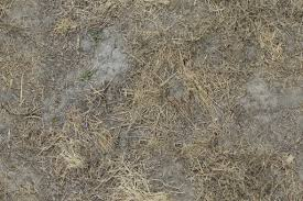 Dry old grass spots on cracked dirt SF Textures