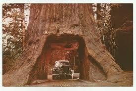 chandelier drive thru tree underwood park california 1940s postcard