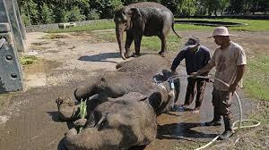 Tafsir Mimpi Memandikan Gajah