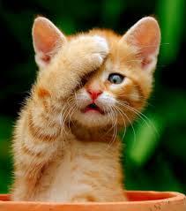 chat en ligne orange