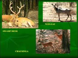 forests and wildlife ppt  forests and wildlife ppt