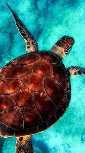 Sea Turtle Iphone Wallpaper - Wall ...