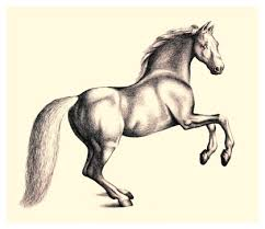 horses drawings.  Horses Pictures Of Horse Drawings  Clipart Library On Horses