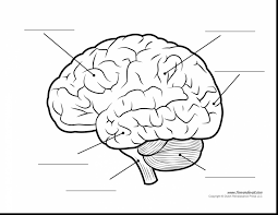 Unbelievable human brain diagram blank with coloring page and rh lizardelement detailed labeled diagram of the brain full diagram of the brain