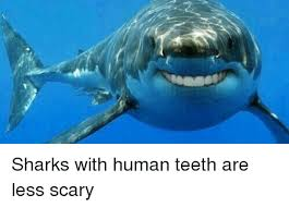 funny shark and sharks sharks with human teeth are less scary