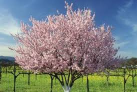 When To Apply Dormant Spray To Fruit Trees  Home Guides  SF GateDormant Fruit Trees