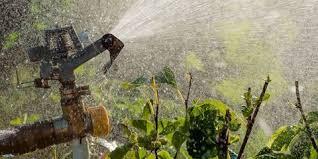 Fall Gardening Tips With Charlie Nardozzi  Vermont Public RadioFall Gardening