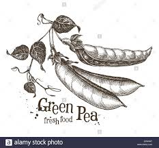 Pea Design Peas Vector Logo Design Template Fresh Vegetables Or Food