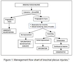 Surgical Management Of Brachial Plexus Injury Biomedical