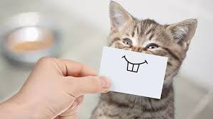 We did not find results for: The Annual Cost Of Pet Ownership Can You Afford A Pet