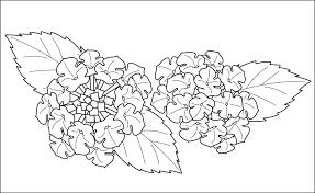 レク素材 七変化花介護レク広場レク素材やレクネタ企画書の