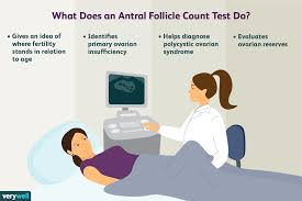 How Ovarian And Antral Follicles Relate To Fertility
