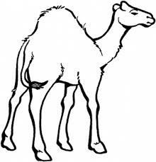 Small Picture Camel Coloring Page for Kids Download Print Online Coloring