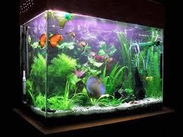 fish tank lighting ideas. Decorating Fish Aquarium Ideas Tank Lighting U