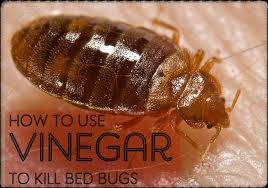 how to make a homemade bed bug spray with vinegar