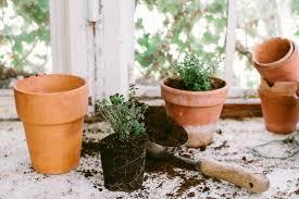 apartment herb garden. Indoor-apartment-herb-garden-tips1.jpg Apartment Herb Garden