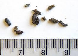 Pest Dropping Identification Chart Missouri Scat Identification Missouris Natural Heritage