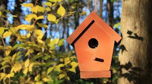 За пъдпъдъци, декоративни птици, малки пилета и др. Postavi Kshichki I Hranilki Za Ptici V Gradskata Gradina Timeheroes Org