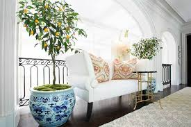 Plant Interior Design Awesome The Indoor Plant Everyone Is Talking About This Spring Kathy Kuo