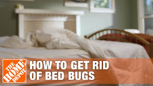 View Couch Covers For Bed Bugs Pictures
