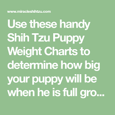 Shih Tzu Puppy Weight Chart Calculate The Adult Size Of A