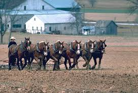 the theos project ordnung und rumspringa  holmes county ohio and elkhart and lagrange counties na the amish are numerous enough that there exists an amish youth subculture