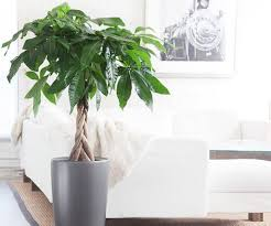 Feng Shui: What's a Money Tree?