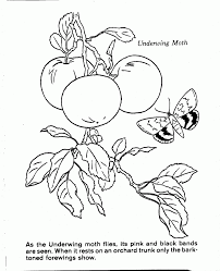 1038x1280 nature scenes coloring pages coloring page for kids kids coloring