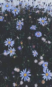 wallpapers, flowers and aesthetic ...