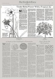 White Paper Flower Bulbs Tender Bulbs Flower With A Tropical Air The New York Times