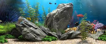 fish tank wallpapers. Plain Tank Intended Fish Tank Wallpapers G
