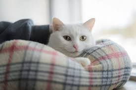 Caring for Cats | BC SPCA