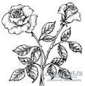 Рисуем простым карандашом цветы поэтапно 37