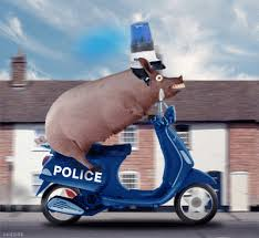 Image result for uk coppers are pigs