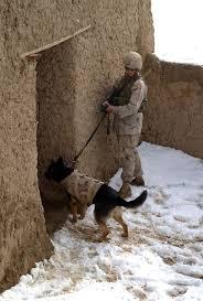 Защитное снаряжение для служебных <b>собак</b> — Википедия