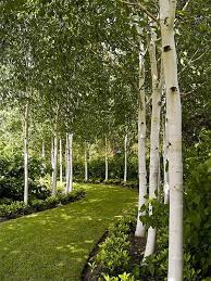 Small Picture 25 best Tree garden ideas on Pinterest Driveway landscaping