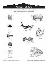 habitat and niche activity sheet answers animal habitats match up animal habitats worksheets and biomes