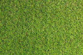 artificial grass texture. Artificial Grass Texture