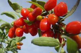 Plante care scad colesterolul