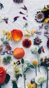 Flowers, huawei 2019, huawei y9 2019 ...