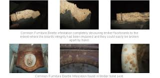 types of timber for furniture. Damage From Wood Bring Pests Can Be Caused By Either The Adult Beetles Or Larva Grubs Dependant On Infestation. In Case Of Common Furniture Types Timber For F