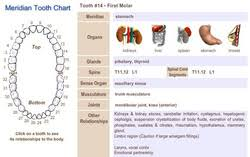 Tooth Organ Meridian Chart Meridian Tooth Chart Shows Teeth And Organ Relationships