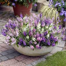 Pin By Ivonne Tamayo Maseda On Plants | Pinterest | Plants, Garden And  Container Gardening