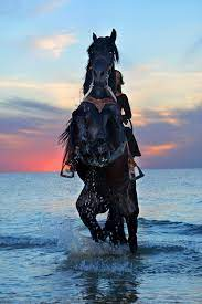 500+ Black Horse Pictures [HD ...